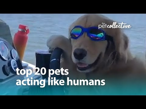Best Pets of the Year: Top 20 Pets Acting Like Humans | The Pet Collective - UCPIvT-zcQl2H0vabdXJGcpg