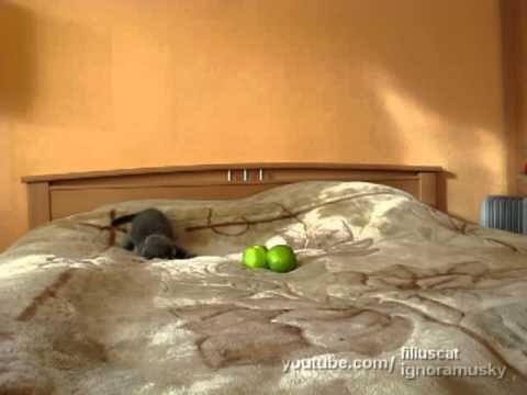 kitten vs TWO scary things (котенок против ДВУХ  неведомых хреней) - UCkIAPBRr82MUFDiHHjw8JpQ