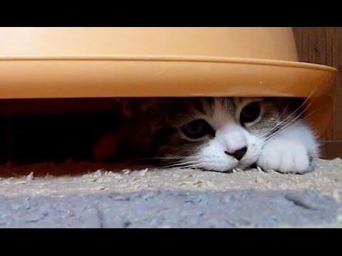 Funny  Kittens Under Dome - UCERQZLRMniqsMlgBxme32cQ