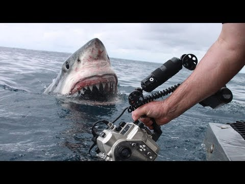 TOP 5 SCARIEST Videos Caught On GoPro! (Scary Experiences On Camera, Lost At Sea, Shark Encounter)