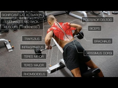 The Best Science-Based Back Workout (TARGET EVERY MUSCLE!) - default
