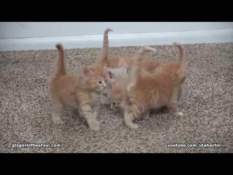 Cute kittens exploring - UCKa6Dt4qiBpD9tVJfk4P52w