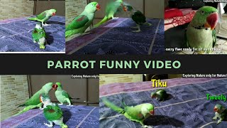 Funny parrot video | How Alexander parrot care baby parrots