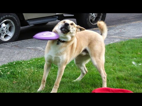 🐶 Dogs And 😹 Cats In Funniest Situations - Funny Animal Videos 😂 - UC09IvZwjpunzrdHH1EHok-w