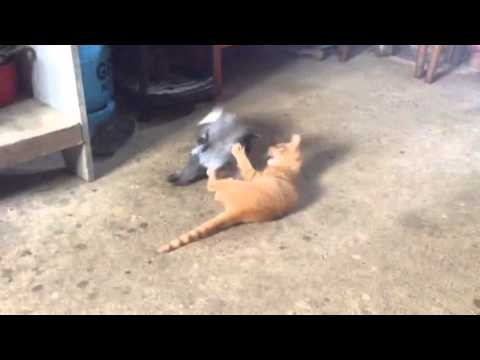Cat vs. dove