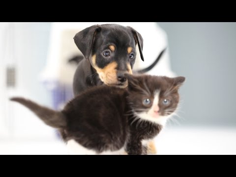 puppies and kittens meet first time