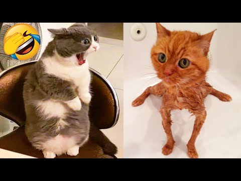 Cute Cats And Dogs That Will Make You Laugh 🥰 - Funny Animals Compilation #4 😂 - UC09IvZwjpunzrdHH1EHok-w