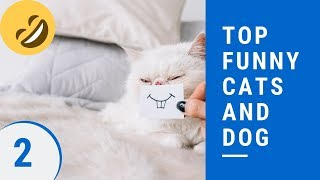 Top funny cats and dog Part 2 - ?best funny cat and dog videos ever 2019?