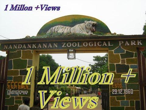 Nandankanan | zoological park odisha | Nandankanan zoo | 2nd biggest zoo in India. - UCOAxm-Sj4wuY5uiOC9RXvbw