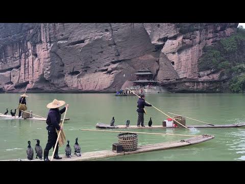 Fishing with Birds Cormorant Fishing - UCM0HcqQPD5Amym-4vBLJtTg
