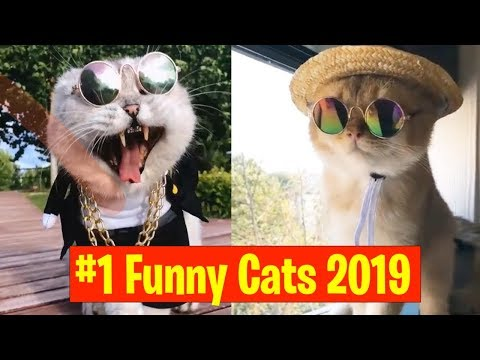 Funny And Cute Cats - Funniest Cats Compilation #1 March 2019