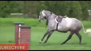 Crazy Animals Video Compilation - Funny & Cute #183