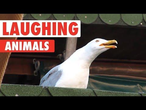 Laughing Animals Compilation - UCPIvT-zcQl2H0vabdXJGcpg