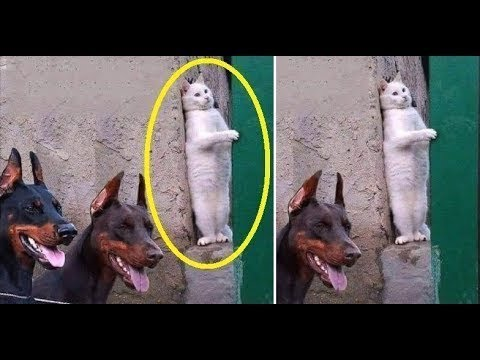♥Cute Cats and Kittens Doing Funny Things 2018♥ #8 - Funny Cat compilation - UCq5hgY37WAryZCwmehDyCaQ