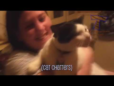 It's TIME for SUPER LAUGH!   Best FUNNY CAT videos