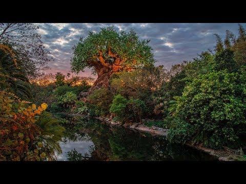 #DisneyParksLIVE: Sunrise at Disney's Animal Kingdom | Walt Disney World - UC1xwwLwm6WSMbUn_Tp597hQ