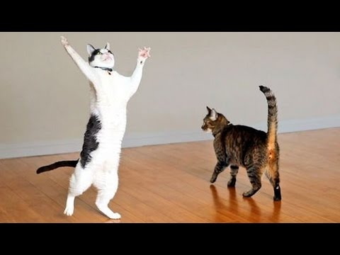 Cats are the kings of animal comedy - Funny cat compilation - UCKy3MG7_If9KlVuvw3rPMfw