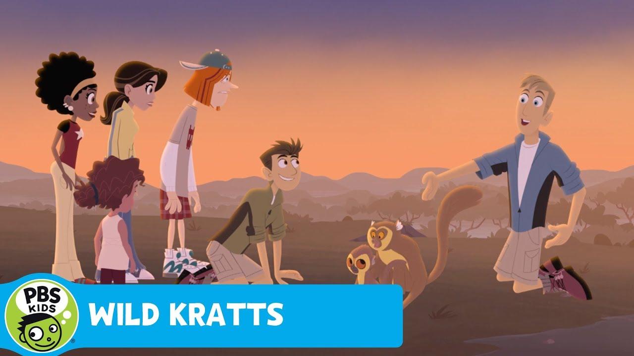 WILD KRATTS | Lemur Tooth Combing | PBS KIDS