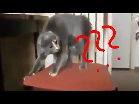 Bizarre Animals verry funny🎈🎈🎈
