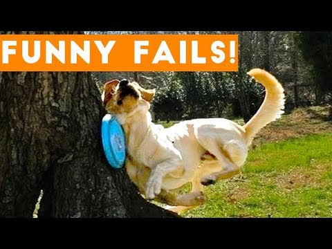 TRY NOT to LAUGH Animals FUNNY PET FAILS Compilation April 2018   Epic Pet Videos & Moments - UCYK1TyKyMxyDQU8c6zF8ltg