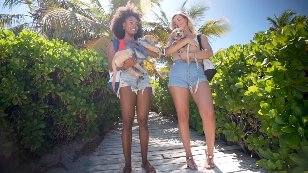 The Potcake Place: K-9 Rescue In Turks And Caicos