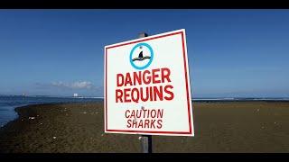 Pierre, 48 ans, a survécu à une attaque de requin :