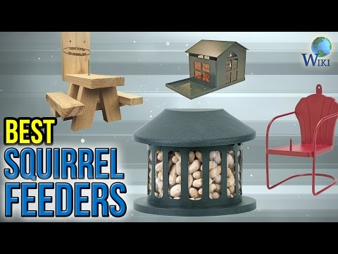 10 Best Squirrel Feeders 2017 - UCXAHpX2xDhmjqtA-ANgsGmw