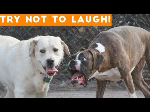 Try Not To Laugh At This Ultimate Funny Dog Video Compilation   Funny Pet Videos - UCYK1TyKyMxyDQU8c6zF8ltg
