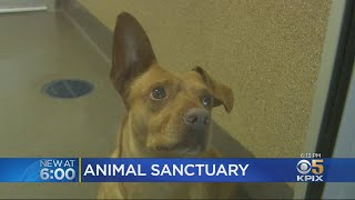 Peninsula Humane Society Buys Land To Shelter Animals That Don't Get Adopted