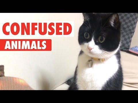 Confused Animals | Funny Pet Video Compilation - UCPIvT-zcQl2H0vabdXJGcpg