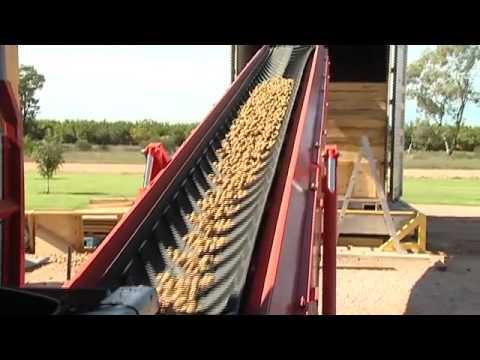 Walnuts Australia Tabbita NSW Walnut Orchard
