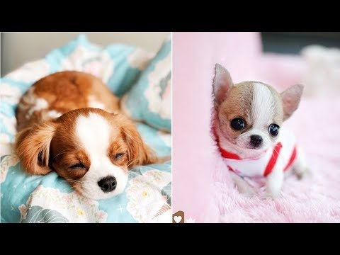 Funny Puppies And Cute Puppy Videos Compilation 2019 - UCq5hgY37WAryZCwmehDyCaQ