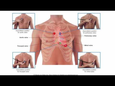 Anatomy 1 | C1 - L7 | Heart and pericardium