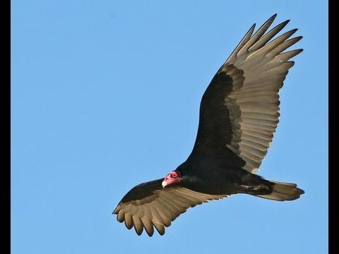 Flying With Birds Round #2 FPV - UC0H-9wURcnrrjrlHfp5jQYA