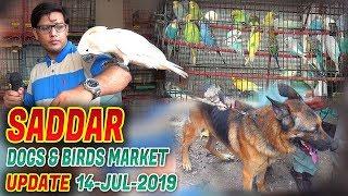 Saddar Sunday Exotic Birds and Animals Market Dog for sale 14-7-19  Jamshed Asmi Informative Channel
