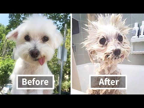 Funny Videos 2018 | Dogs And Puppies | Animals Compilation - UCUhSJzCP6BeSscUT7FAGS8A