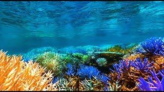 Fukushima Radiation Causes Coral Reefs To Glow Before Dying Not Co2