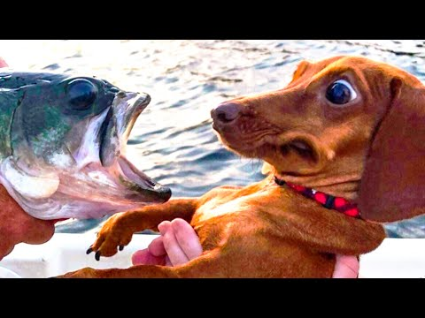🤣 Funniest 🐶 Dogs and 😻 Cats - Awesome Funny Pet Animals Videos 😇 - UC09IvZwjpunzrdHH1EHok-w