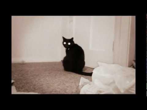 Funny cat compilation - UCMJuHtXrG-r97fCyM5UeVPg