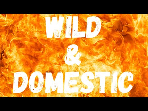 Wild & Domestic Fire From Heaven (Day 25)  INTO THE DAY ~ Ep. 54