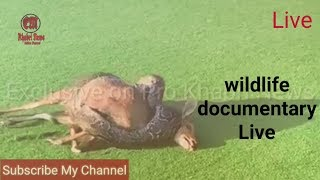 wildlife documentary  Discovery channel animals Animal planet || Pro khabri news