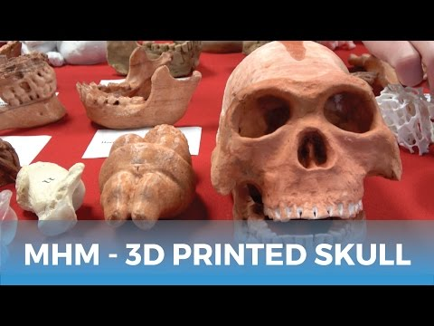 MatterHackers Minute // Anthropologist Uses 3D Printed Skulls in Class