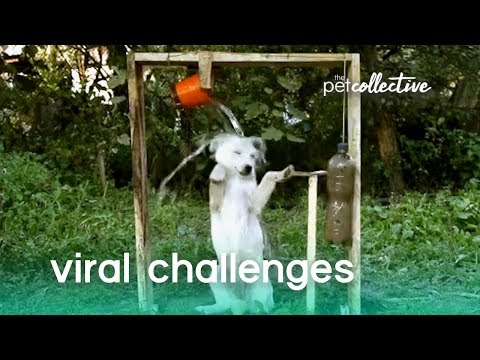 Viral Challenges