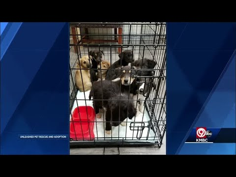 Several puppies dumped in landfill