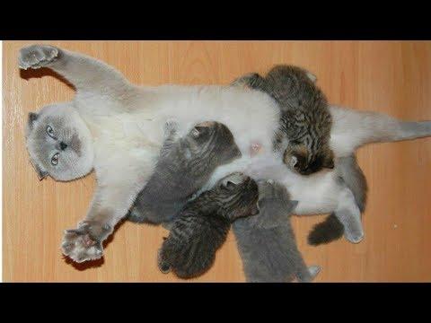 Cat Moms Nursing Their Cute Baby Kittens Videos Compilation 2018 - UCCLFxVP-PFDk7yZj208aAgg