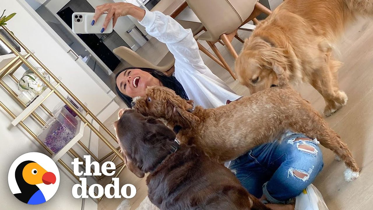 These Four Dogs Completely Run The D'Amelio Household | The Dodo You Know Me Now Meet My Pet