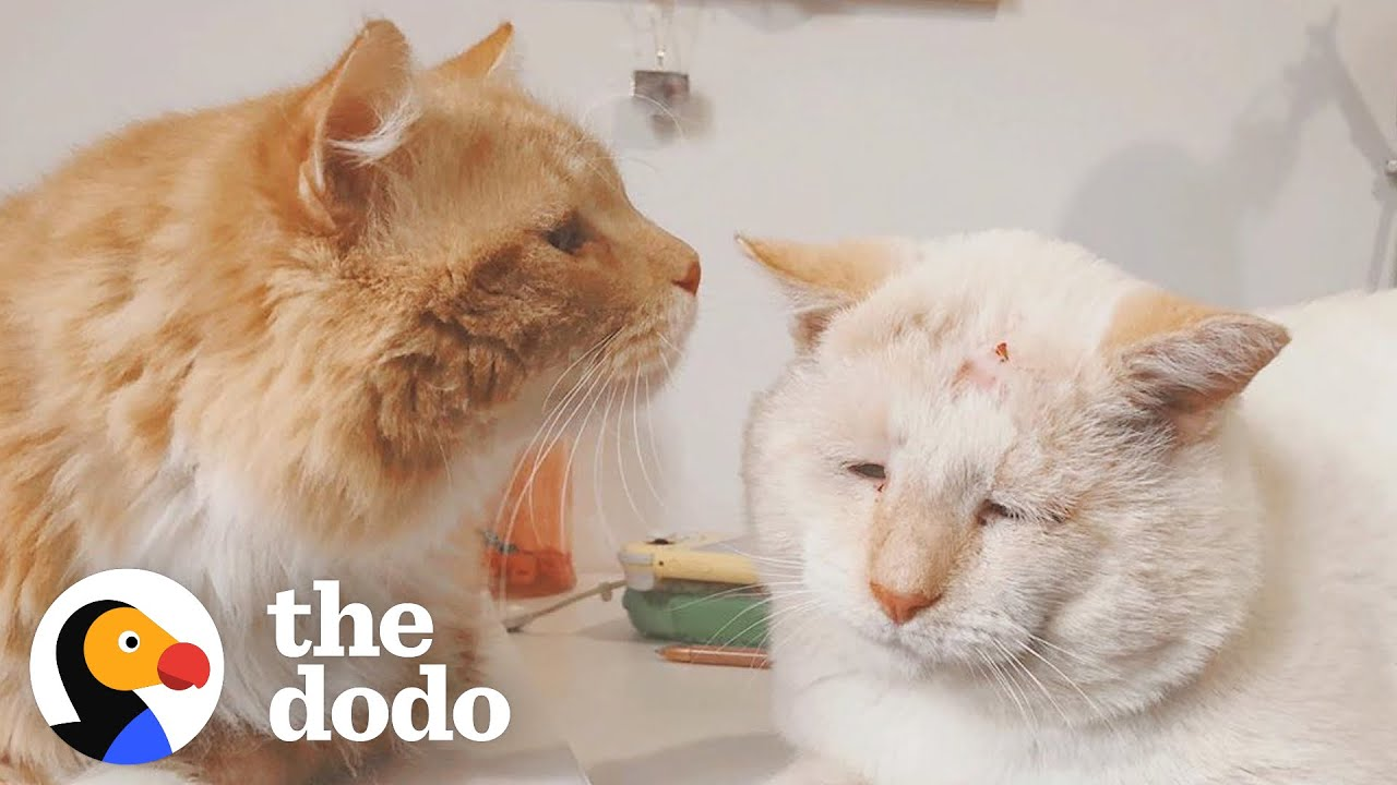 Stray Cats Become Inseparable Once Adopted | The Dodo