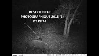 Best of piège photographique