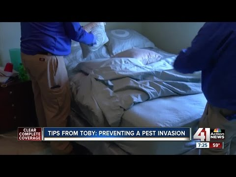 Tips from Toby: preventing a pest invasion