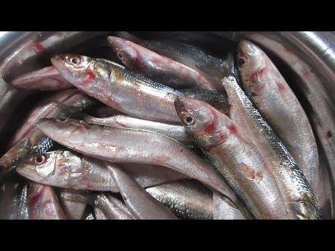 Meen Kulambu - Fish curry /Tamil Kitchen Recipes in my village food / Mathi curry